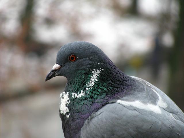 Google Pigeon Update Raleigh SEO