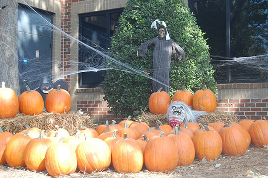 Halloween 2016 at TheeDesign - Raleigh Web Design and Digital Marketing - Pumpkins and Cobwebs