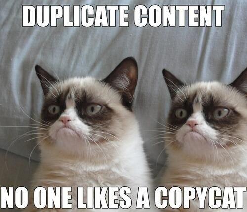 Cat Tax Meme
